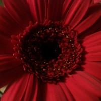 Bild mit roter Blume